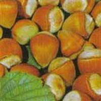 Sadnice lesnika ludolf