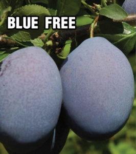 sljiva blu fri