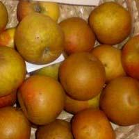 jabuka kozara