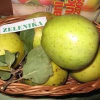 jabuka zelenika